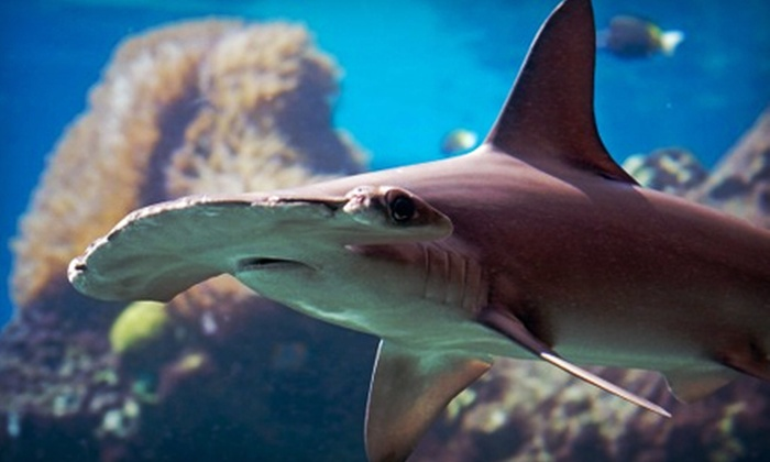 Portland Aquarium - Milwaukie: Weekday Visit for Two or Four to the Portland Aquarium (Up to 47% Off)