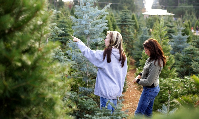 Little Elf's Christmas Trees - Multiple Locations: Christmas Trees and Accessories at Little Elf's Christmas Trees (50% Off). Two Options Available.