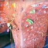 51% Off Kids' Rock-Climbing Camp at ClimbX