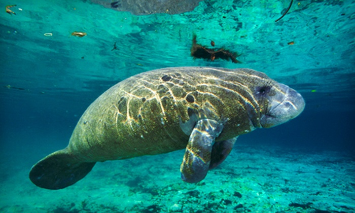 Adventure Diving - Crystal River: $28.50 for a Three-Hour Guided Manatee Snorkel Tour at Adventure Diving in Crystal River ($55 Value)