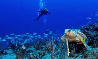 image for $174 for a PADI Open Water Scuba Certification Course for One from Scuba Works ($469 Value)