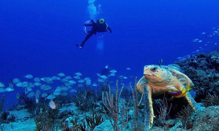 Scuba Works - Scuba Works: $189 for a PADI Open Water Scuba Certification Course for One from Scuba Works ($469 Value)