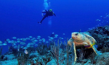 $179 for a PADI Open Water Scuba Certification Course for One from Scuba Works ($399 Value)