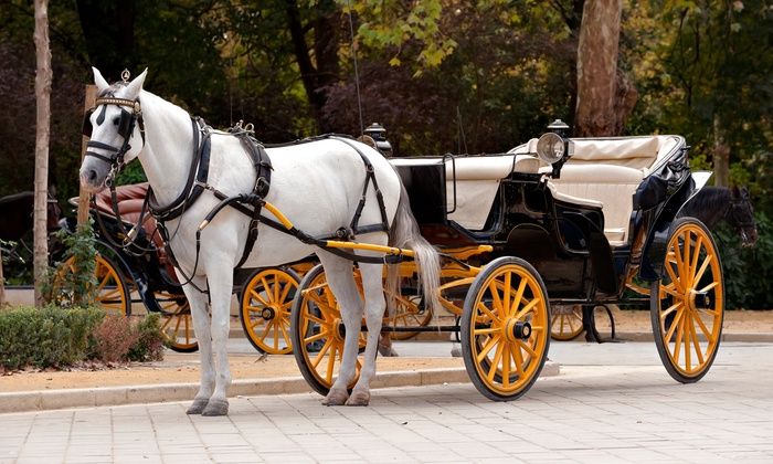 Ladybug Carriage Tours - Multiple Locations: Carriage Ride for Two or Four from Ladybug Carriage Tours (Up to 39% Off)