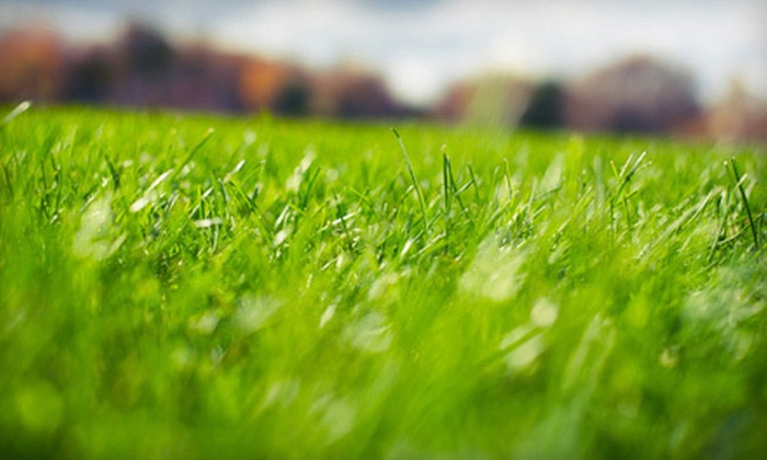 Top Notch Turf - Upper Baseline: $29 for a Spring Lawn-Care Treatment for Up to 10,000 Square Feet from Top Notch Turf ($75 Value)
