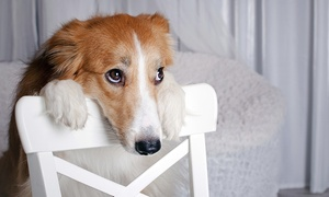 Online Acacemies: Online Academies: Animal Psychology Diploma (92% Off)
