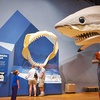 South Carolina State Museum - Up to 61% Off