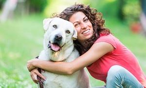 Curso online de cuidador canino por 19 €