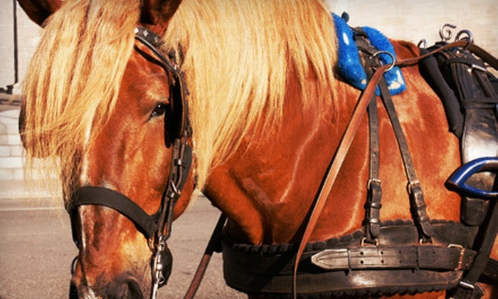 Ladybug Ranch LLC - All Matters Art Gallery: Carriage Ride for Two or Four from Ladybug Ranch LLC (Up to 53% Off)