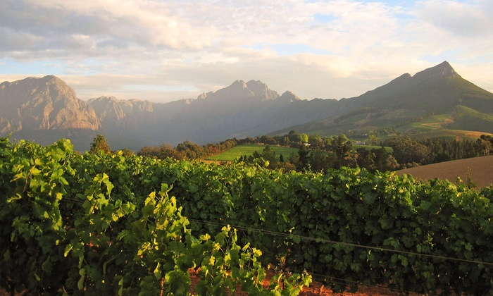 Willy Limos - Civic Center: $199 for a Chauffeured Wine-Country Tour for Six from Willy Limos ($750 Value)