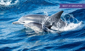 Davey's Locker Sportfishing: Tickets for a Whale Watching and Dolphin Cruise from Davey's Locker Whale Watchings (Up to 70% Off)