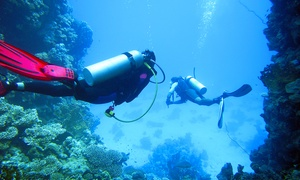 Diving Nervi Itc: Corso di sub con lezioni teoriche e immersioni in piscina e in mare (sconto fino a 84%)