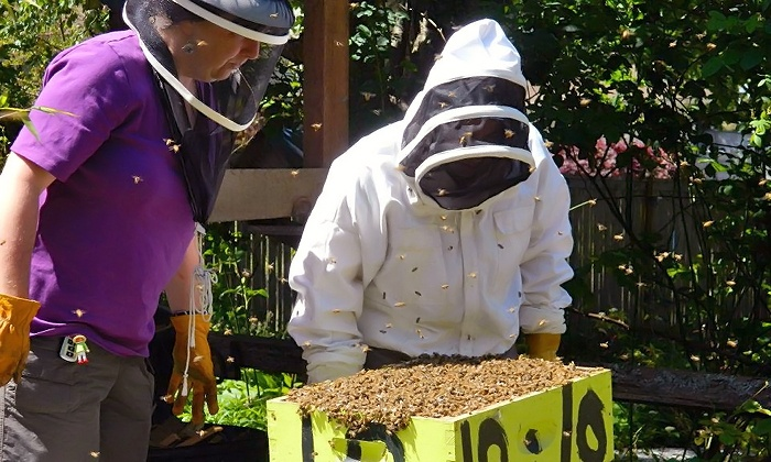 Beekeeping Class - Highline: Become Friends with Bees in a Beekeeping Class