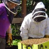Become Friends with Bees in a Beekeeping Class