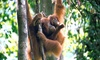 Sumatra, Indonesia: 9-Day Wildlife Trek