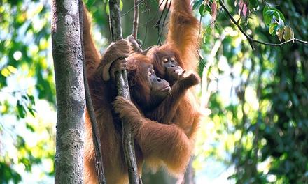 Sumatra: for a NineDay Wild Orangutan and Tiger Trek with Expedition Jungle