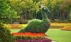 Dallas Arboretum (DUPE) - The Dallas Arboretum: $15 for a Summer at the Arboretum Visit for Two at Dallas Arboretum and Botanical Garden ($30 Value)