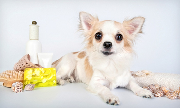 Lucca Bella Doggie Spa and Boutique - Oak Lawn: Dog Daycare or Bathing Package at Lucca Bella Doggie Spa and Boutique (Up to 78% Off). Four Options Available.