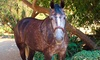 Rainbow Canyon Ranch Riding Academy - Azusa: Horseback-Riding Lessons at Rainbow Canyon Ranch Riding Academy (Up to 59% Off). Three Options Available.