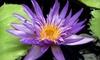 Royal Botanical Gardens - Burlington: Visit for One or Four to Royal Botanical Gardens (Up to Half Off)