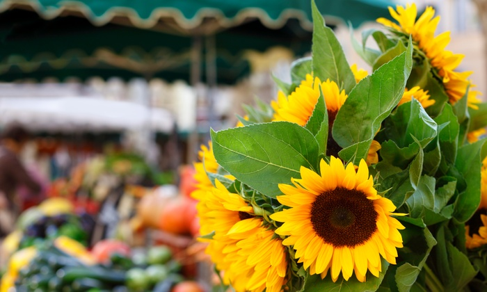 Willard Peak Organic Market - Ogden: $24 for $40 Worth of Farmers' Market Goods — Willard Peak Organic Market and Co-Op