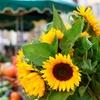 40% Off Farmers' Market Goods