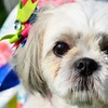 PAWS Chicago's Zoetis Run For Their Lives – Up to 51% Off Run/Walk