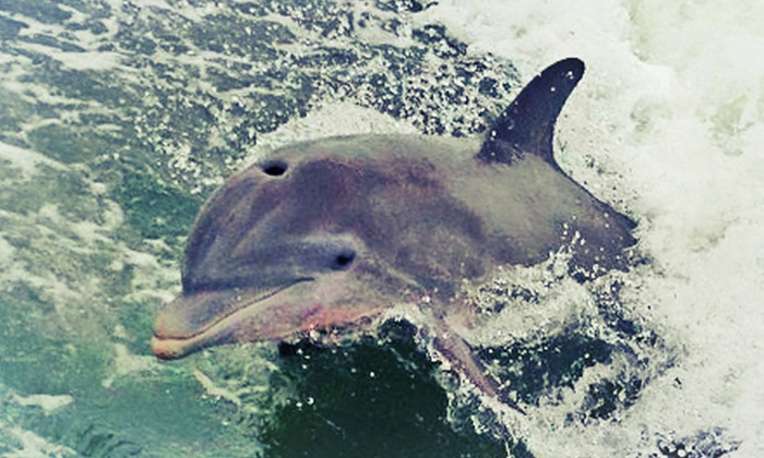 Mangrove Masters - Punta Rassa: $99 for a Two-Hour Dolphin Cruise for Four from Mangrove Masters ($200 Value)