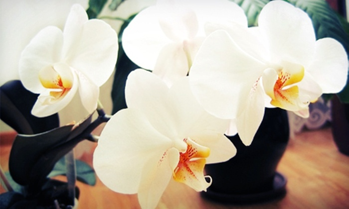 The Flower Cart - Lodi: $25 for $50 Worth of Floral Arrangements at The Flower Cart