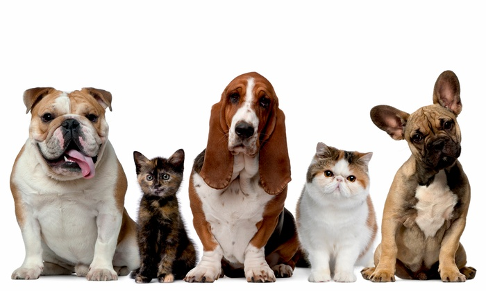 Pets Plus - Caprock: $10 for $20 Worth of Pets and Pet Supplies at Pets Plus