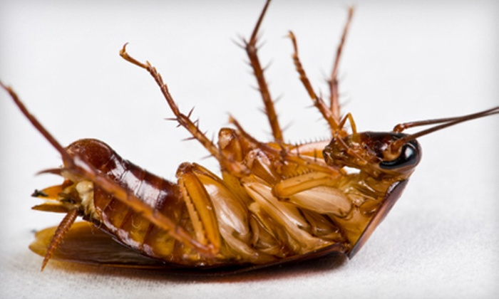 A American Pest Control - Houston: $39 for a Pest Control Package (Up to $200 Value), Plus $300 Toward Termite Treatment from A American Pest Control