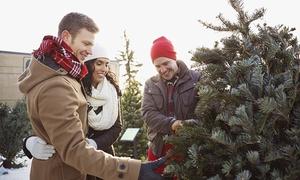 Hof Oelkers GmbH & Co. KG: Festlicher Weihnachtsbaum bis 2,50 Meter in Premium-Qualität und Getränke auf dem Hof Oelkers (bis zu 28% sparen*)