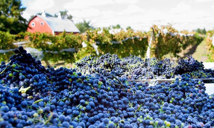 Next Chapter Vineyard - New Prague: Vine Training and Barrel Tasting for Two or Four at Next Chapter Vineyard (Up to 59% Off)