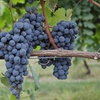 18% Off All-Day Lehigh Valley Wine Tour with Transportation