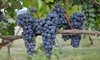 All-Day Lehigh Valley Winery Tour - 11th Ave & West 45th Street: $89 for a Lehigh Valley Wine Tour Including Lunch and Transportation ($109 Value)