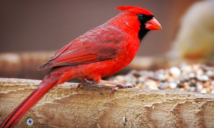 Wild Birds Unlimited - Huntersville: $15 for $30 Worth of Bird-Feeding and Nature Supplies at Wild Birds Unlimited