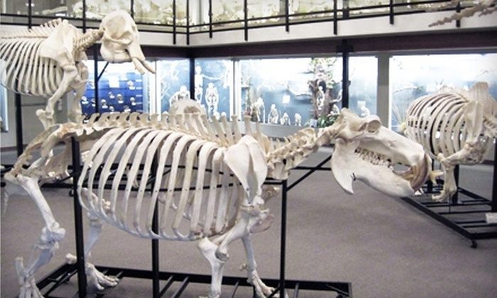 Museum of Osteology - Oklahoma City: Visit for Two or Four to the Museum of Osteology (Half Off)