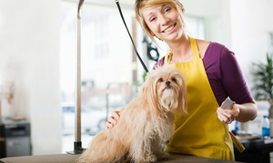 U Dżekiego: Strzyżenie psa z rozczesywaniem sierści od 49,99 zł w salonie U Dżekiego (do -37%)
