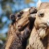 Oakland Zoo – 32% Off Family Membership