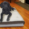 Thermapup Self-Warming Dog-Pad Pet-Bed Insert