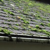 60% Off Roof Cleaning and Organic Moss Treatment