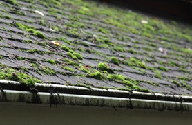 Window Works Property Services: $159 for Roof Cleaning and Organic Moss Treatment from Window Works Property Services (Up to 60% Off)