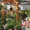 $10 for Plants at Floral Acres Greenhouses & Garden Centre