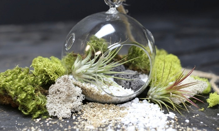 One-Hour Terrarium Making Class - Southeast Los Angeles: Build Two Custom Terrariums with Succulents and Air Plants