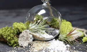 Build Two Custom Terrariums With Succulents And Air Plants