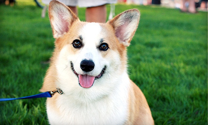 Dog Days - Multiple Locations: One Night of Dog Boarding or Two Days of Day Care at Dog Days (Up to 55% Off)