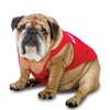 Rasta Imposta Quirky Pet Costumes for Halloween