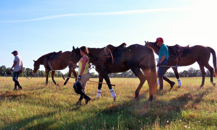 Overbrook Farms - Wagener: Horseback Riding or Polo Lessons at Overbrook Farms (Up to 60% Off)