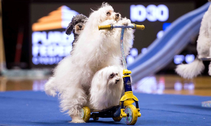 Olate Dogs - Santander Performing Arts Center: Presale: Olate Dogs Canine Variety Show (Friday, November 20, at 7:30 p.m.)