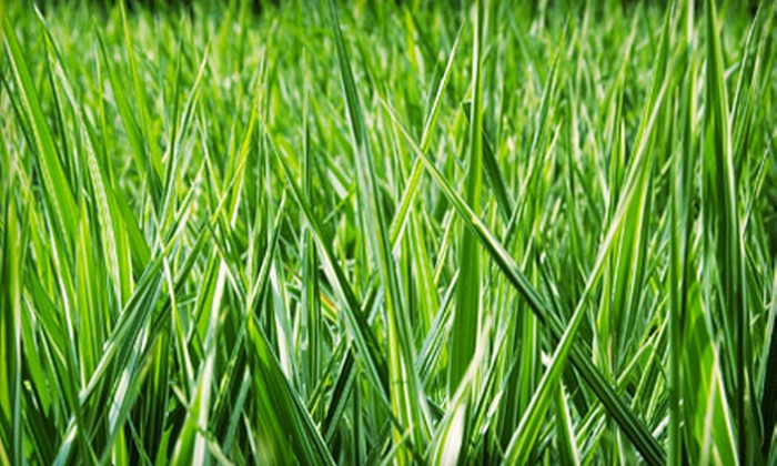 New Nature Landscaping, LLC - Ocala: $35 for Two Lawn-Care Visits from New Nature Landscaping, LLC ($80 Value)
